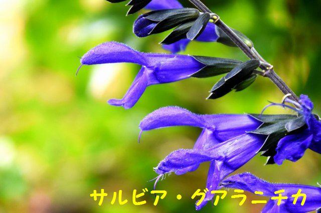 JPG_2221.jpg