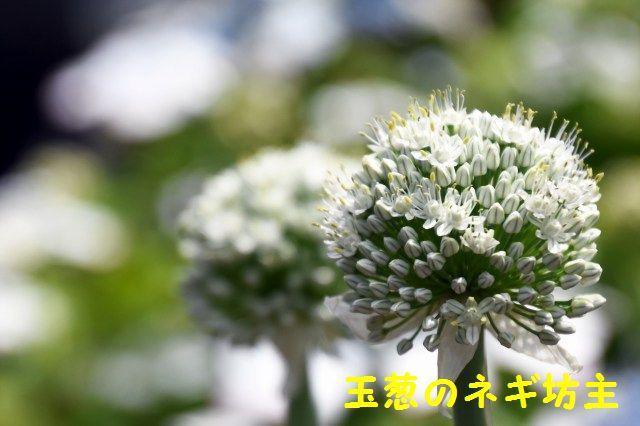 JPG_2232.jpg