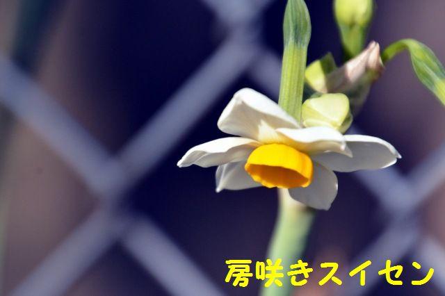 JPG_8346.jpg