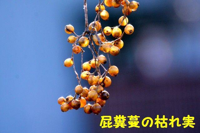 JPG_8356.jpg
