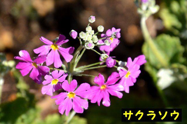 JPG_9033.jpg