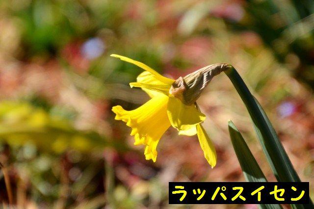 JPG_9040.jpg