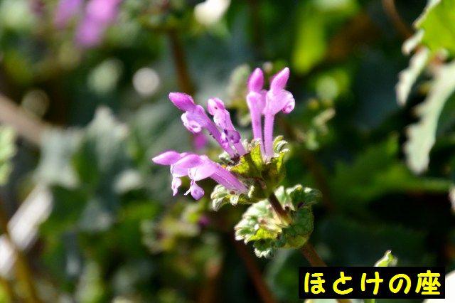 JPG_9044.jpg