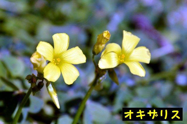 JPG_9073.jpg