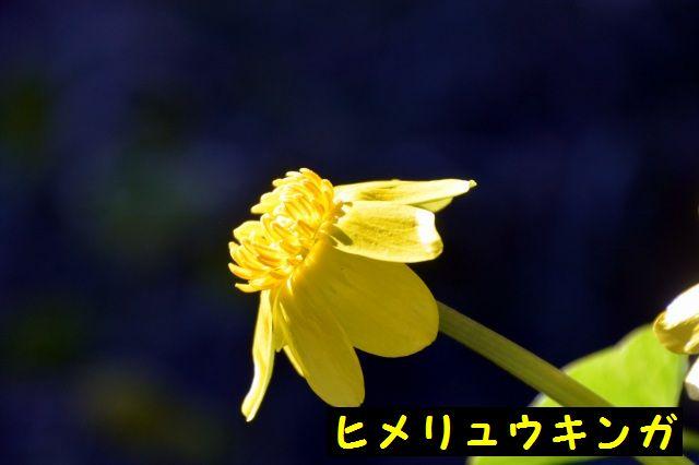 JPG_9077.jpg
