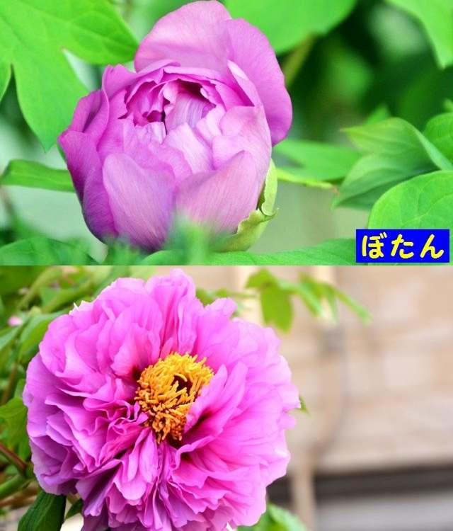 JPG_9503.jpg