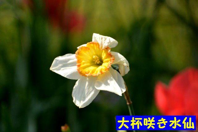 JPG_9535.jpg