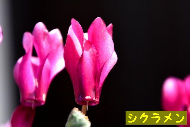 DSC_1973.jpg