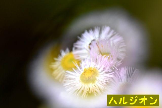 DSC_1976.jpg