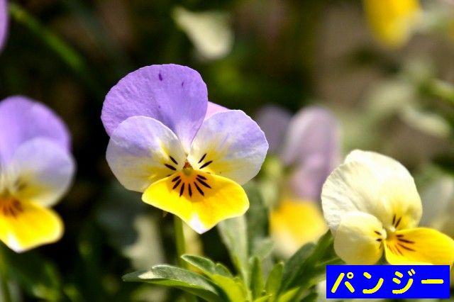 JPG_9502.jpg