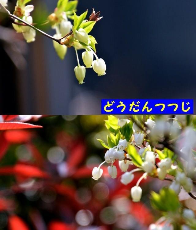 JPG_9514.jpg