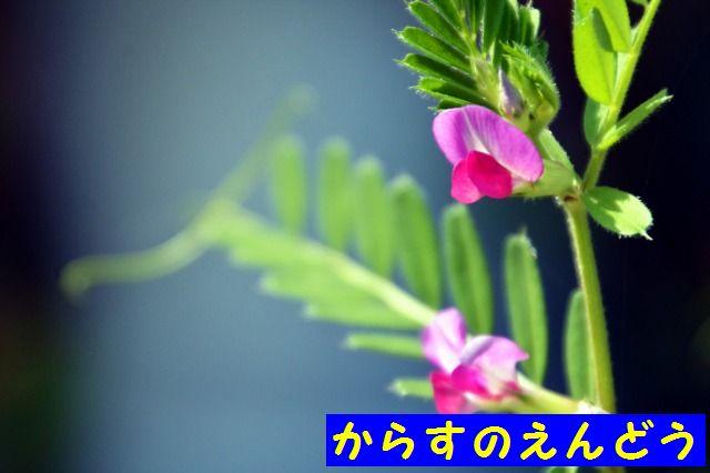 JPG_9517.jpg