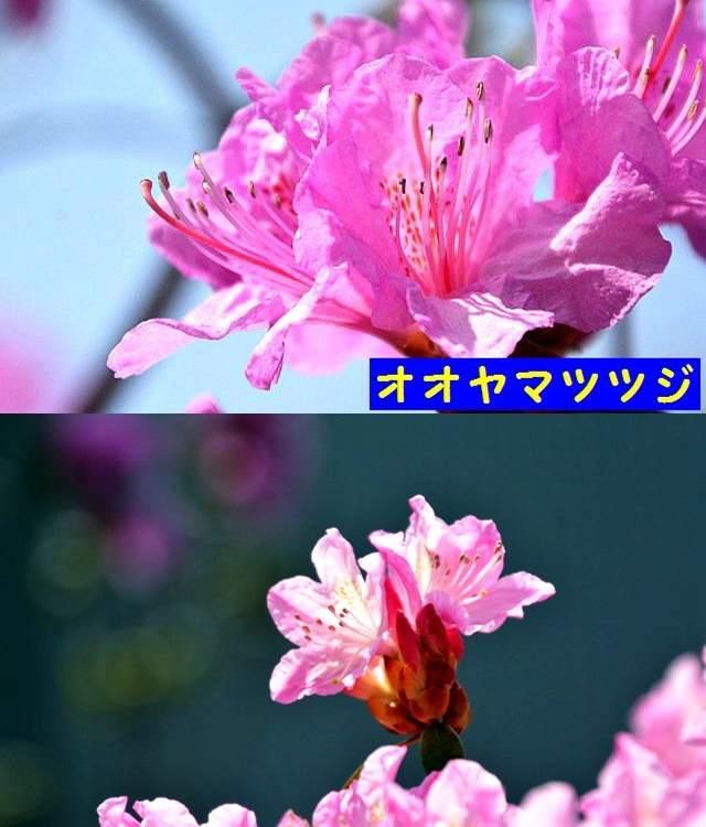 JPG_9519.jpg
