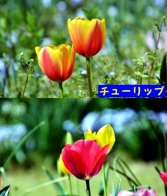 JPG_9536.jpg