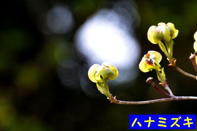 JPG_9549.jpg