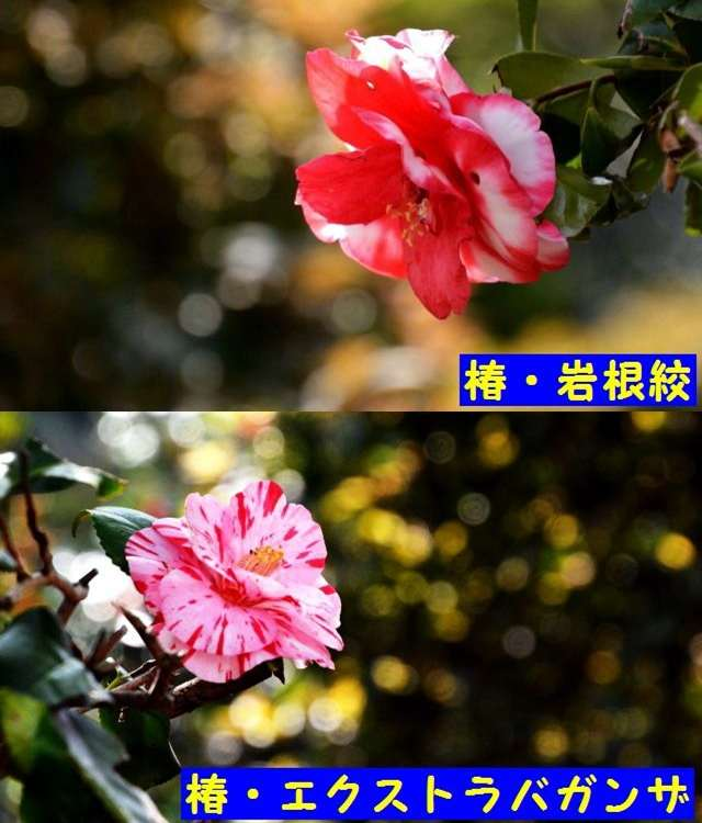 JPG_9550.jpg