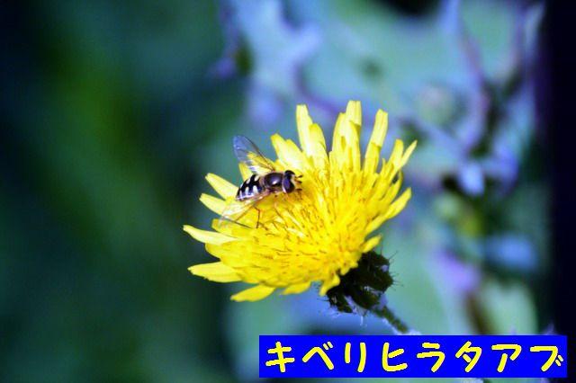 JPG_9560.jpg